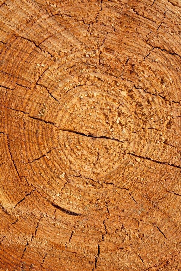 Закройте вверх по поперечному сечению ствола дерева показывая годичные кольца, текстуру стоковая фотография
