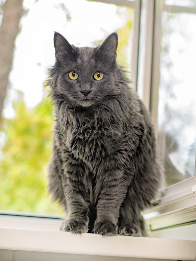 Закройте вверх по портрету красивого серого кота стоковое изображение rf