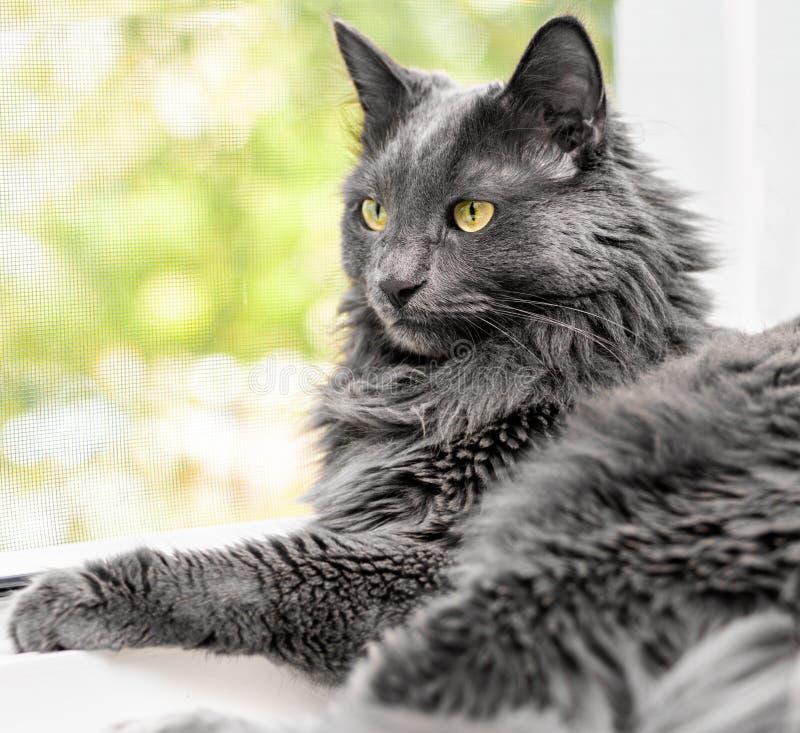 Закройте вверх по портрету красивого серого кота стоковое изображение