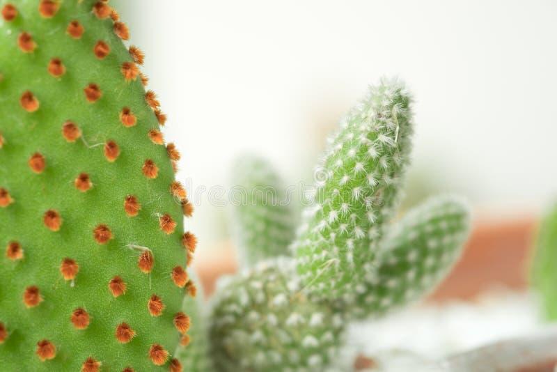 Закройте вверх по предпосылке кактуса естественной стоковое фото rf