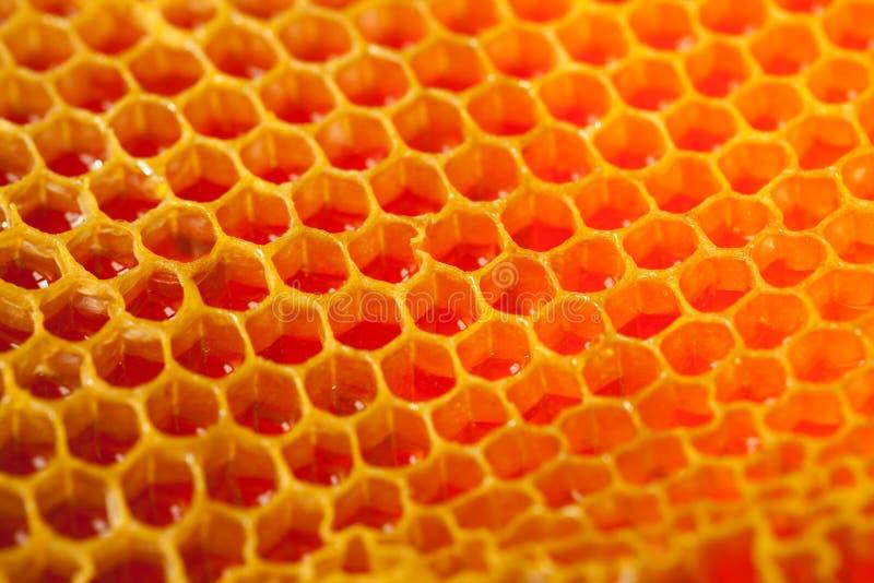 Закройте вверх по студии снятой органического меда в соте - здоровой концепции еды стоковые изображения