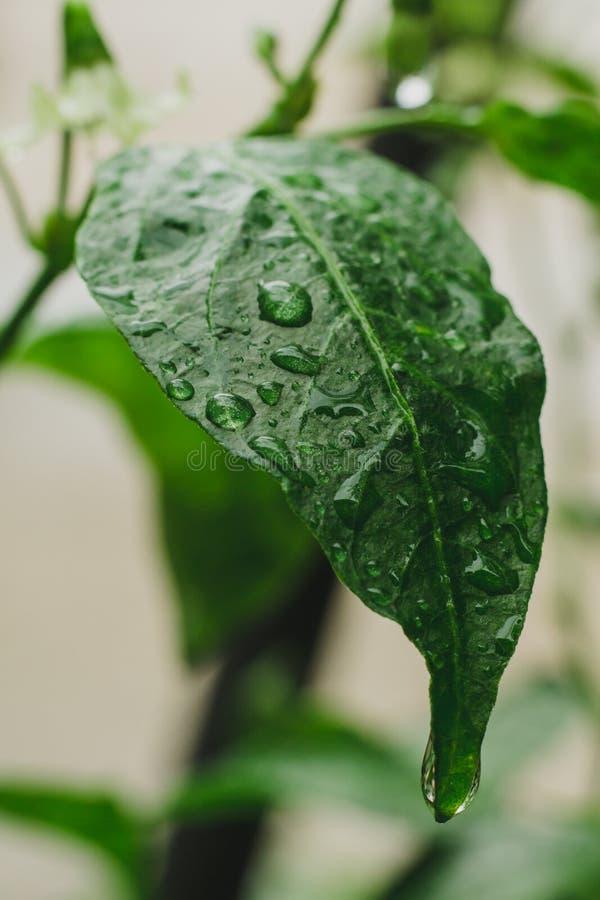 Закройте вверх по съемке на влажных зеленых лист стоковое изображение rf