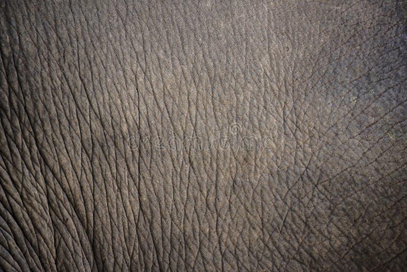 Закройте вверх по текстуре и предпосылке кожи слона стоковые изображения rf