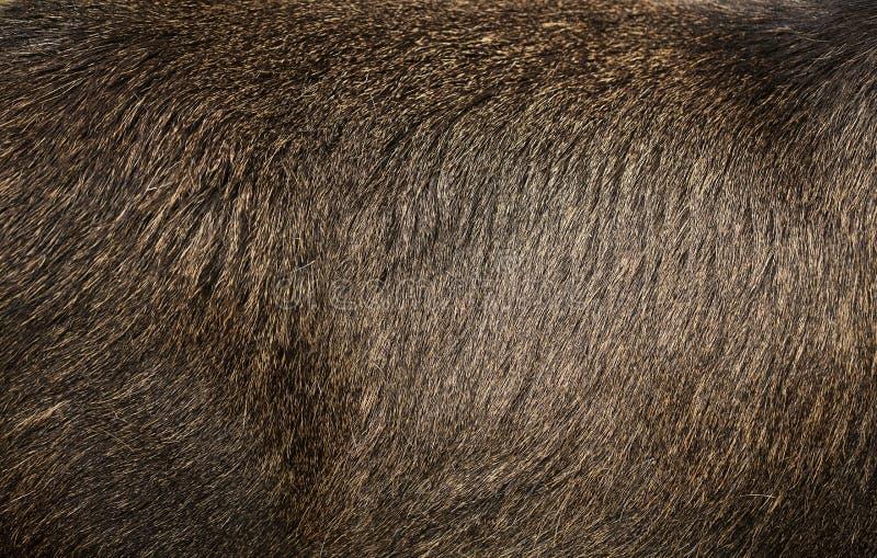 Закройте вверх по текстуре меха лосей стоковая фотография rf