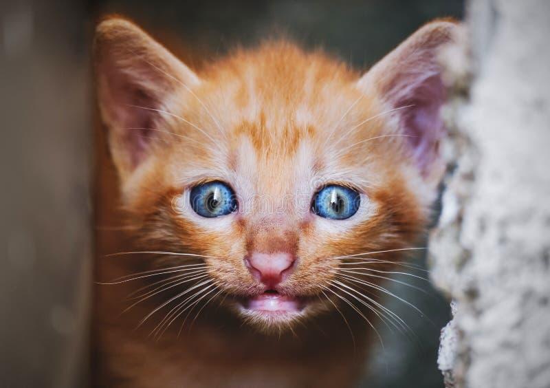 Закройте вверх по усмехаясь стороне котенка, малой глубине селективного фокуса поля стоковые фотографии rf