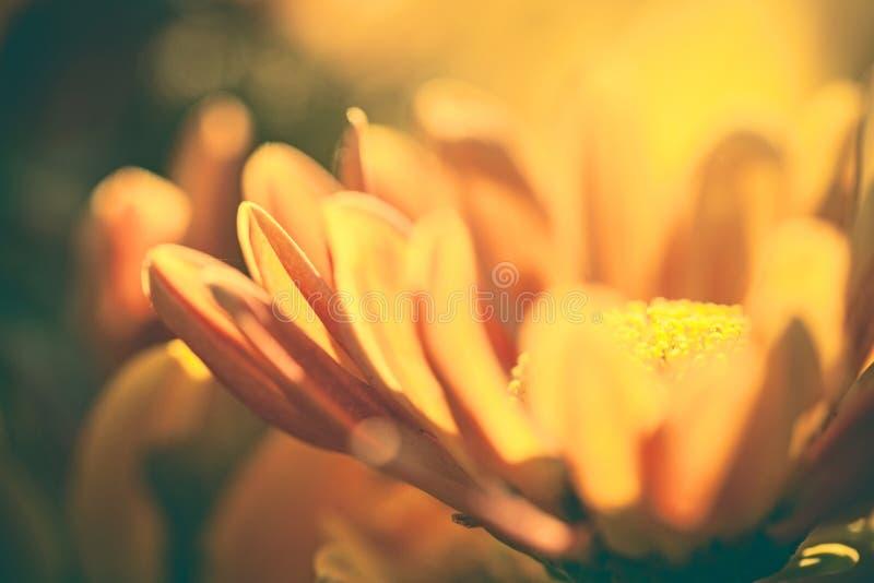 Закройте вверх по цветку желтого цвета макроса с светом стоковое фото