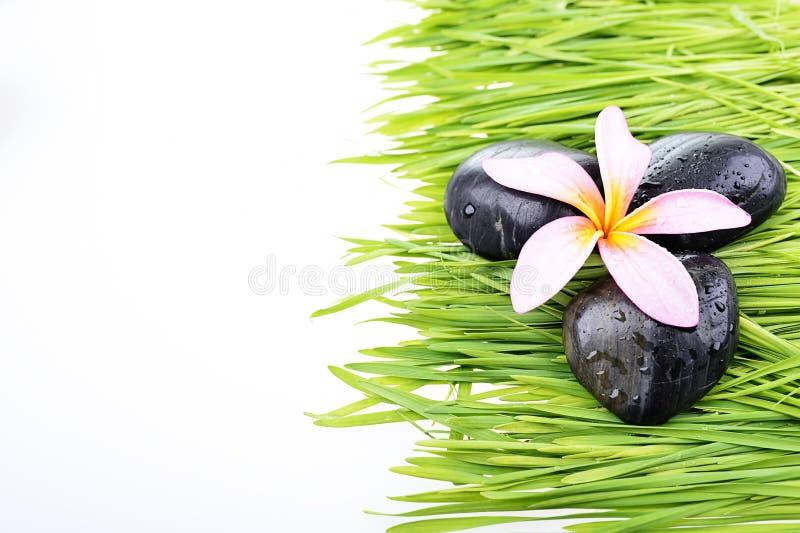 Закройте вверх по цветку Frangipani и черному камню на траве стоковые фотографии rf