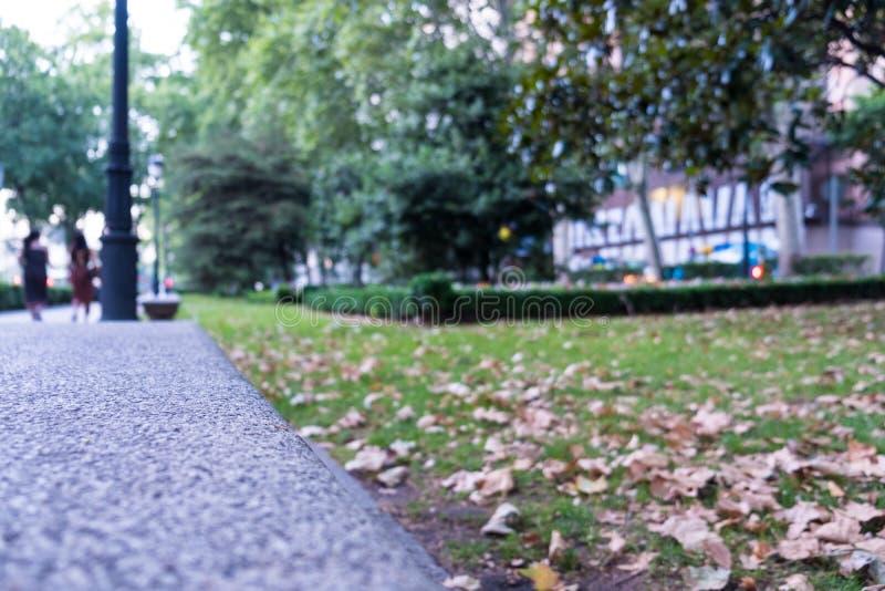 Закройте вверх прогулки пути парка с травой и листьями стоковое фото rf