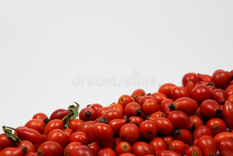 Закройте вверх плодов шиповника стоковые фотографии rf