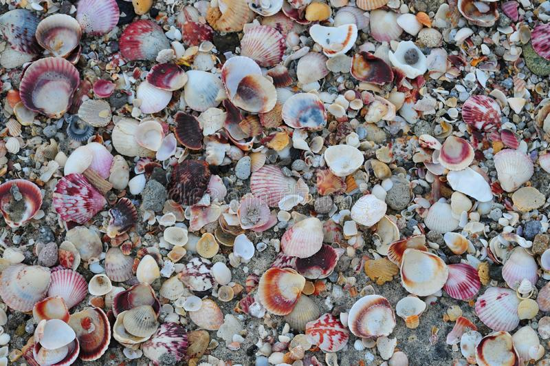 Закройте вверх раковин моря стоковые изображения rf