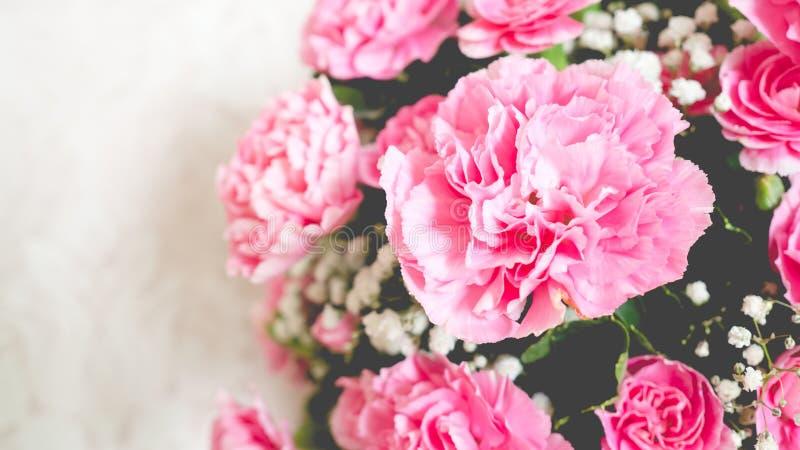 Закройте вверх розовых гвоздик стоковая фотография
