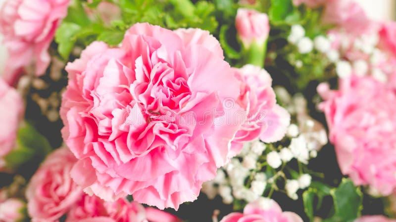 Закройте вверх розовых гвоздик стоковая фотография rf