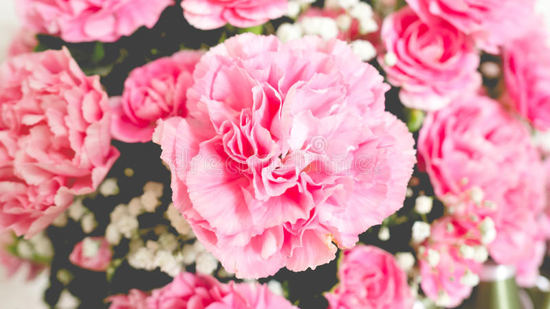 Закройте вверх розовых гвоздик стоковое фото rf