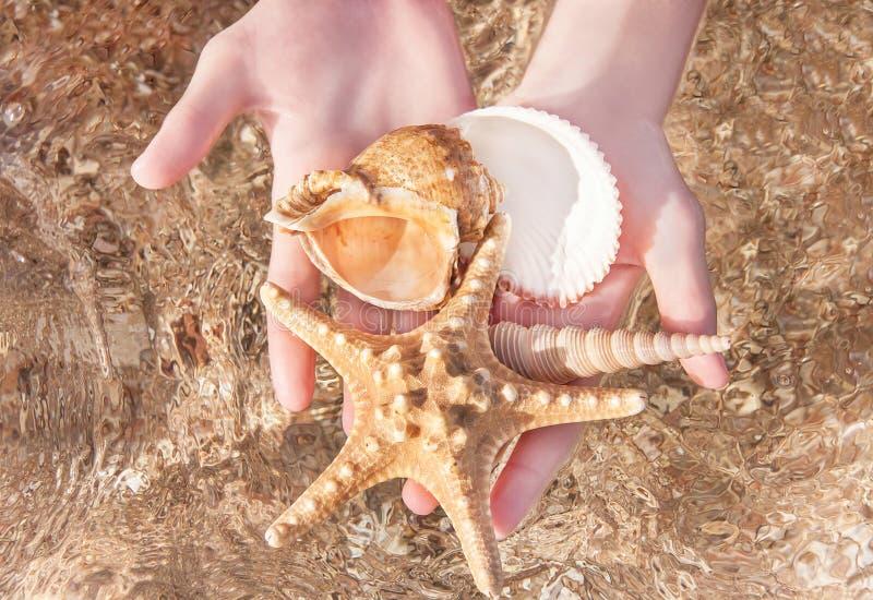 Download Закройте вверх рук женщины держа Seashell Стоковое Изображение - изображение насчитывающей естественно, много: 40579925