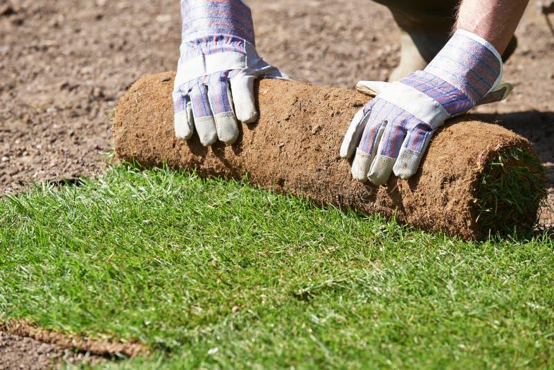 Закройте вверх садовника ландшафта кладя дерновину для новой лужайки стоковое изображение