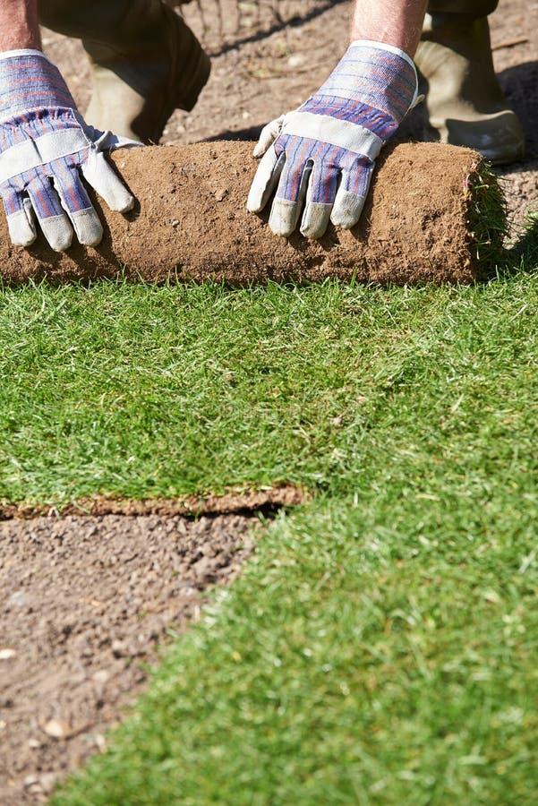 Закройте вверх садовника ландшафта кладя дерновину для новой лужайки стоковая фотография