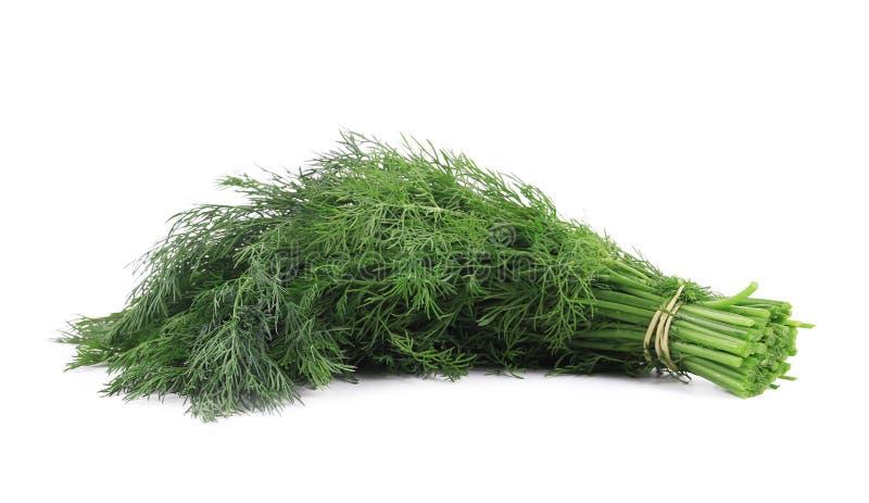 Закройте вверх свежей травы укропа стоковые фотографии rf