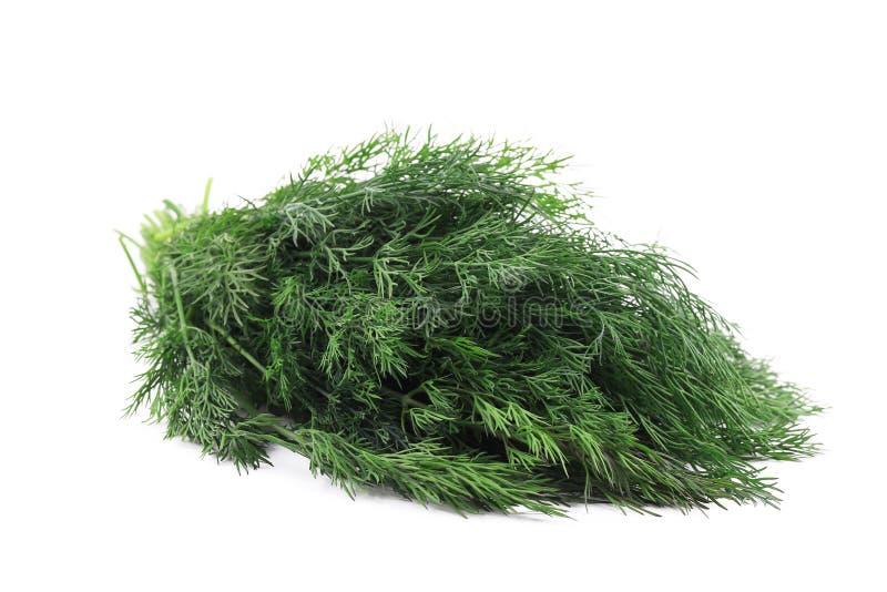 Закройте вверх свежей травы укропа стоковые фото