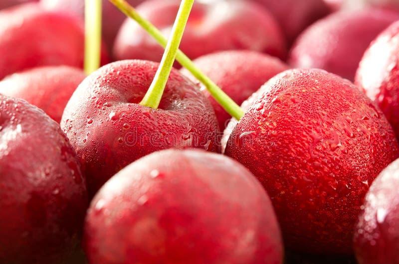 Закройте вверх свежих ягод вишни с падениями воды в лете стоковые фотографии rf