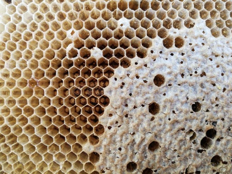 Закройте вверх сота в природе после пчел leaved стоковые изображения
