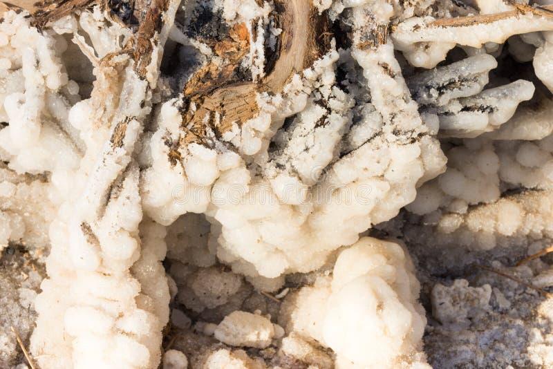 Закройте вверх соли мертвого моря стоковые изображения