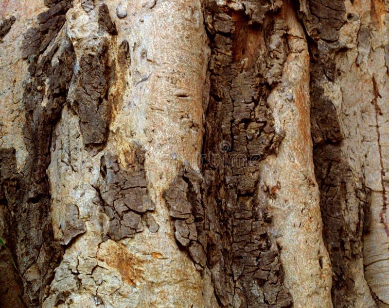 Закройте вверх ствола дерева и своей расшивы стоковые изображения rf