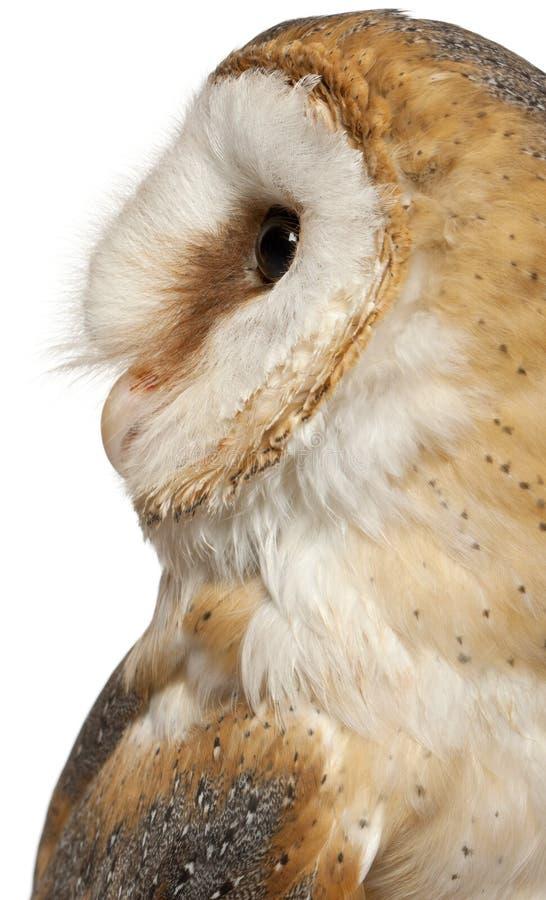 Закройте вверх сыча амбара, Tyto alba, перед белой предпосылкой стоковое фото