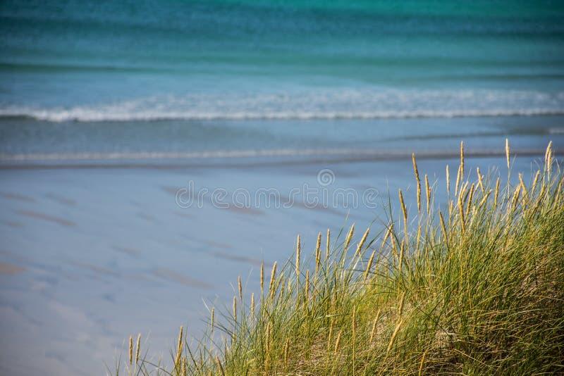 Закройте вверх травы моря в песчанных дюнах с голубыми волнами на песчаном пляже на заднем плане стоковые фотографии rf