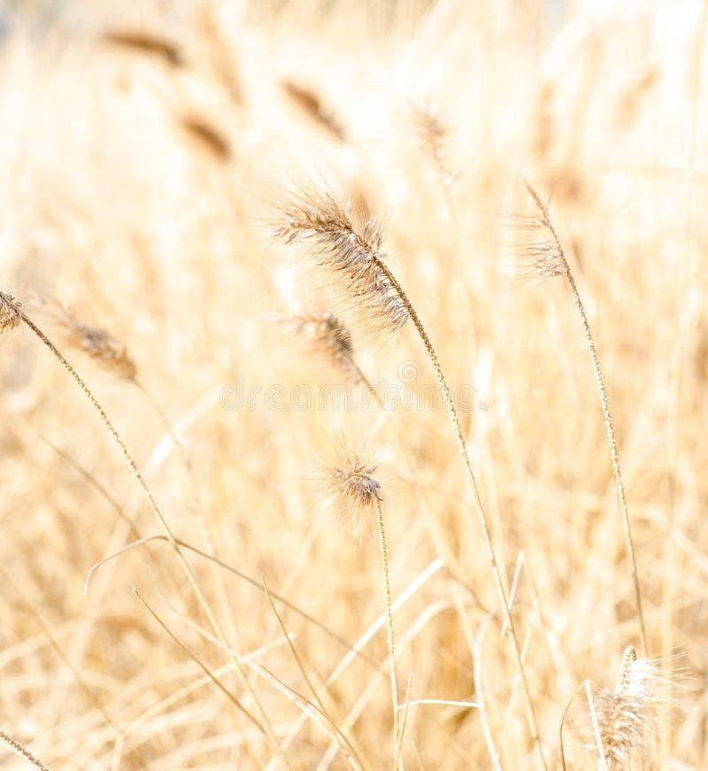 Закройте вверх травы marram стоковые фото