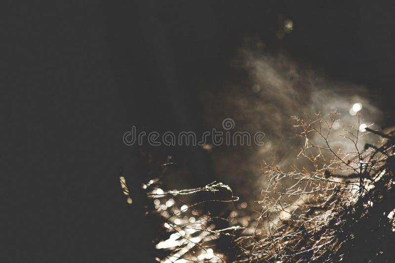 Закройте вверх тумана и потока дерева от древесины стоковые изображения rf
