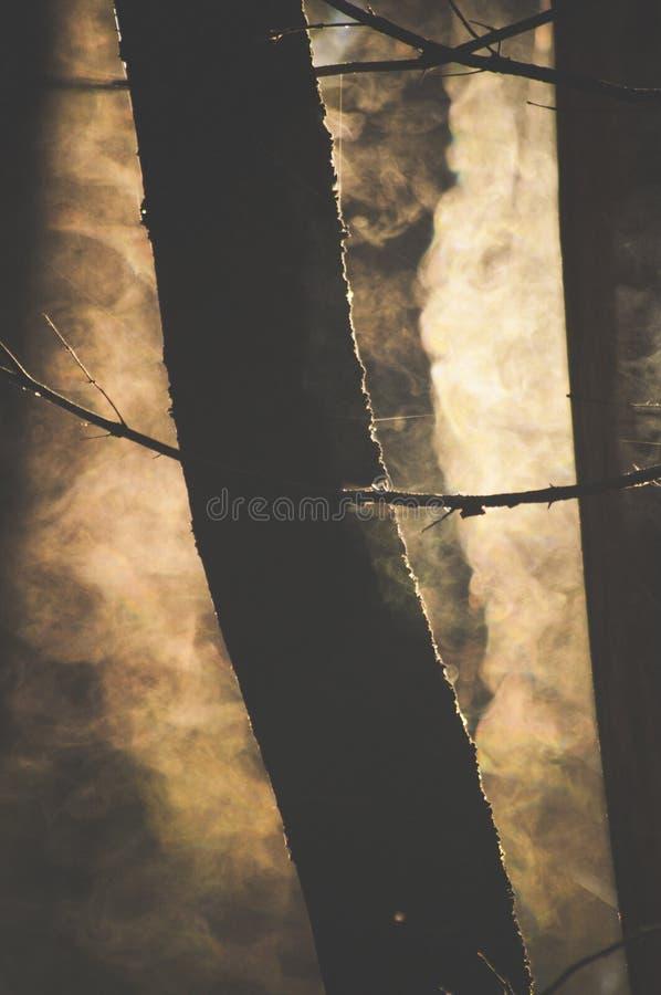 Закройте вверх тумана и потока дерева от древесины стоковые фото