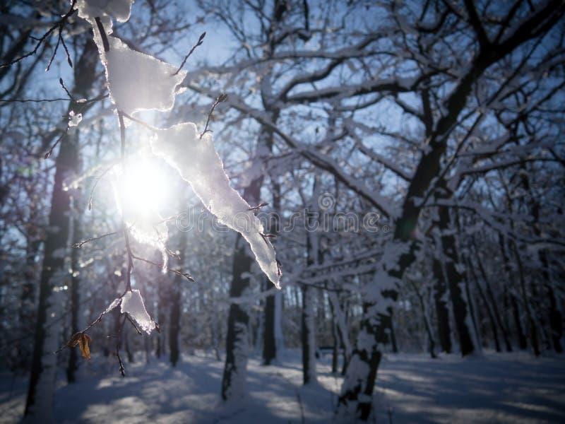 Закройте вверх хворостины покрытой снегом стоковое фото rf