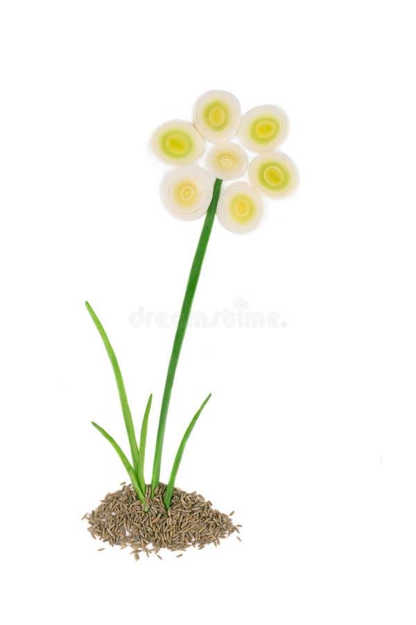 Закройте вверх цветка лука стоковые фотографии rf
