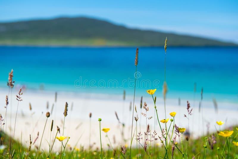 Закройте вверх цветков весны с белым песчаным пляжем стоковая фотография rf