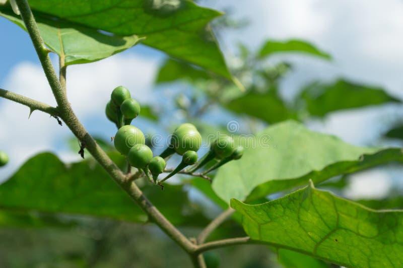 erecția semințelor de dovleac)