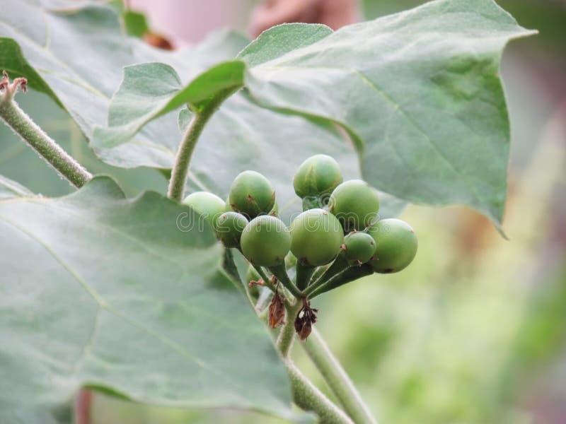 Seminte de dovleac – beneficii pentru sanatate