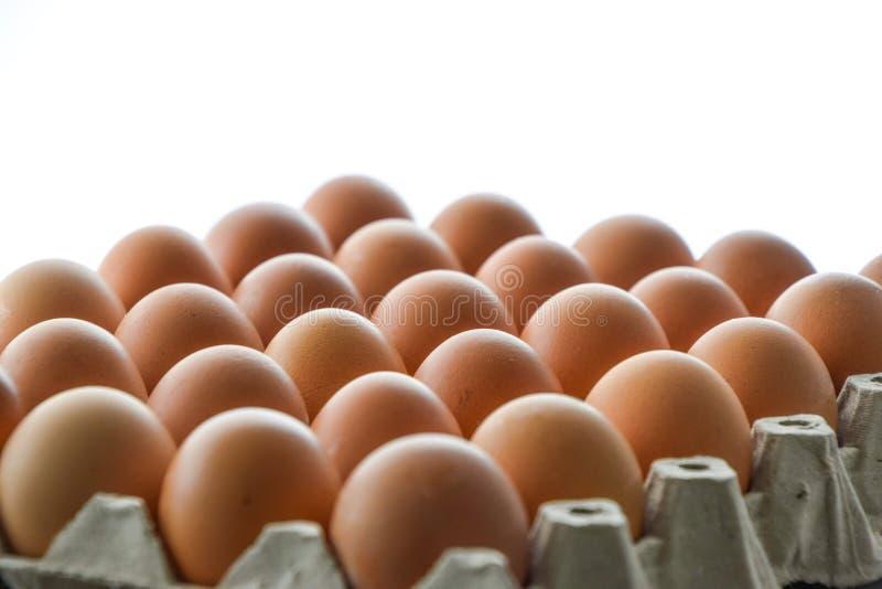 Закройте вверх яя, много яя аранжировал упорядоченно в панели яйца на белой предпосылке стоковые фотографии rf