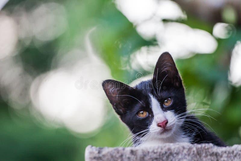 Закройте до маленького милого кота на заднем плане стоковые фото
