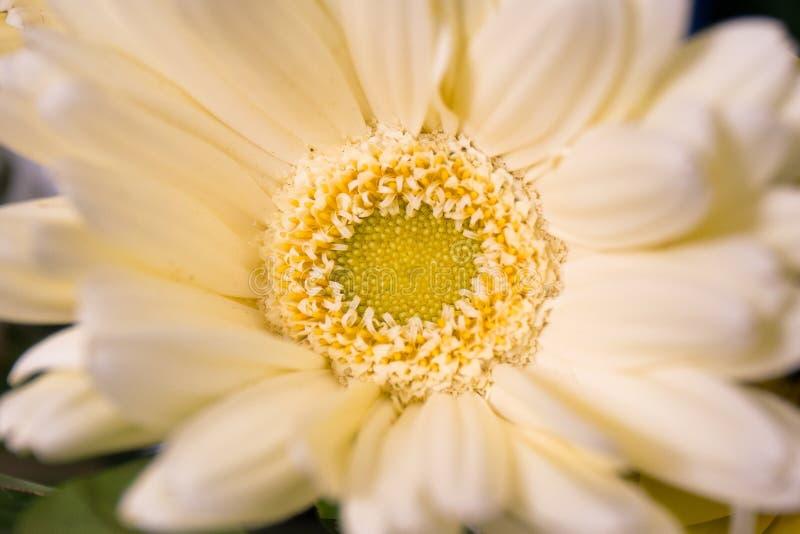 Закройте до желтого цветка плодолистика стоковые изображения rf