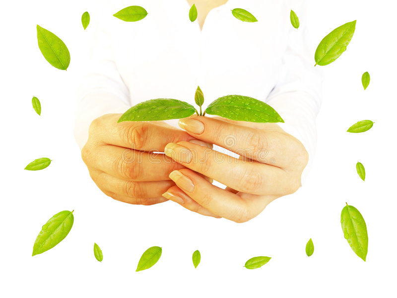 закрутка листьев стоковое изображение rf