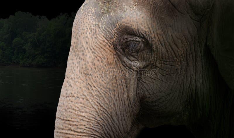 Закрытие слонов с лесным фоном стоковое фото
