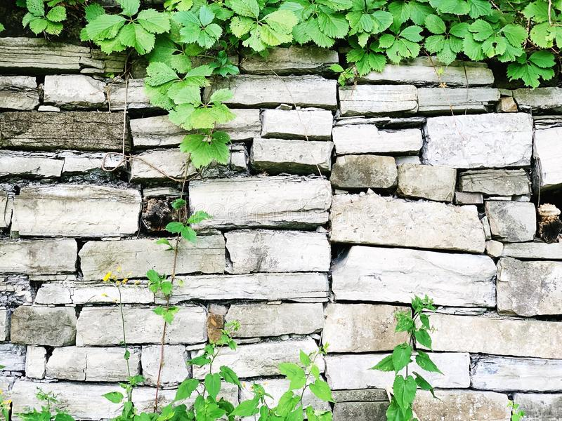 Закрытие стены белого кирпича растениями стоковое изображение