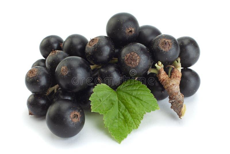 Закрытие черных ягод с током стоковые фото