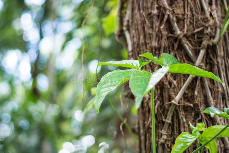 Закрытый вверх зеленых листьев на стержне дерева стоковое изображение rf