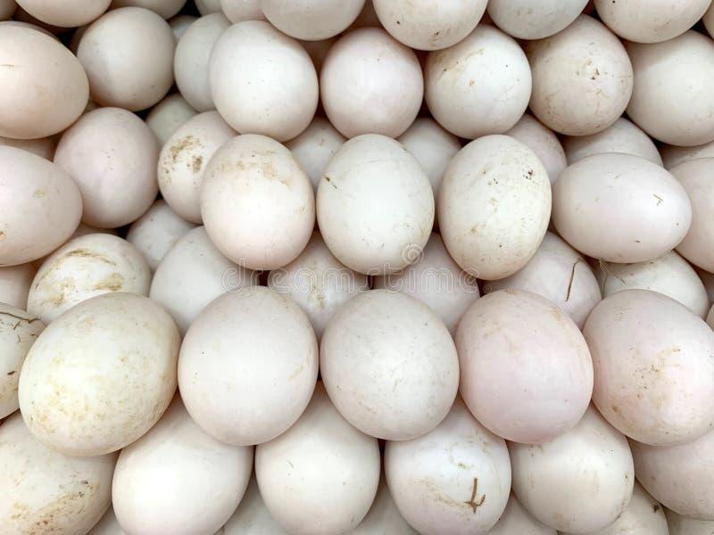 Закрытый вверх по изображению класть много свежего яя утки совместно, органические белые яйца стоковое изображение rf