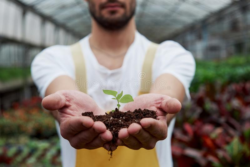 Закрыть фотографию Менсы держат землю за руки, а растение в середине мало стоковые изображения
