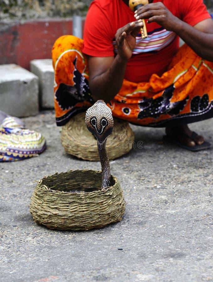 Заклинатель змей Шри-Ланки стоковая фотография