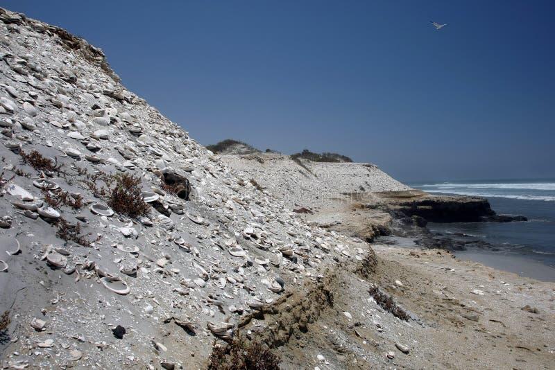 залив asuncion стоковое изображение