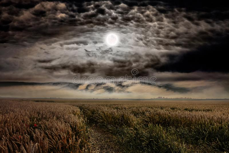 Залитая лунным светом ноча над пшеничным полем Луна среди темного c стоковое фото rf