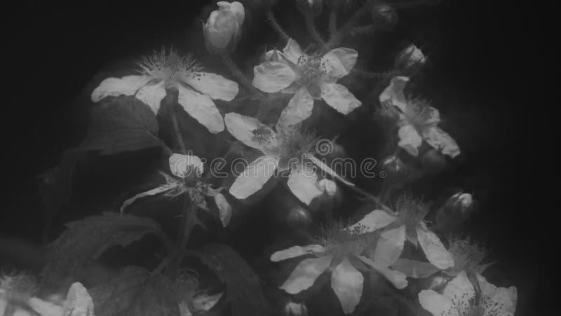 Залитое лунным светом лето стоковое изображение